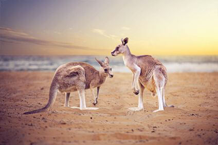 Don't hop about like a kangaroo, speed off in your car rental from Sixt Australia